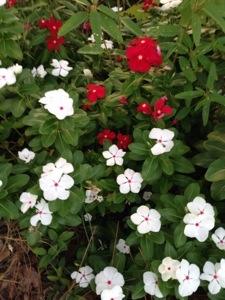 Mama's flower garden